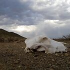 Bone Dry, but rain  coming, Karoo, Free State, South Africa by 3216andy