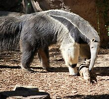 Anteater by Angela Pritchard