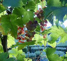 French Grapes by MeredithS