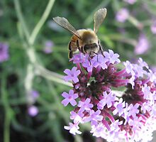 A Taste of Violet by shutterbug2010