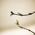 Simple Beauty by Jessica Hardin