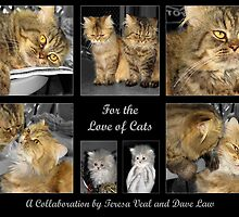 For the love of Cats by Teresamarie
