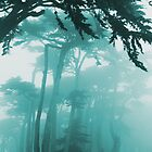 Forrest Fog photo painting by randycdesign