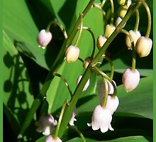 lily of the valley by LisaBeth
