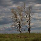 Prairie Hills by Gretchen  Mueller Steele
