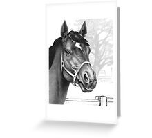 Stare of the Stallion Greeting Card