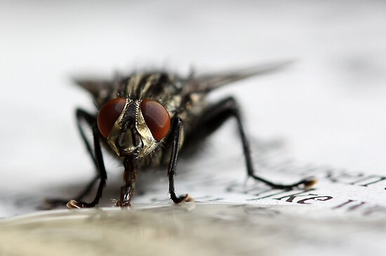 Fly on newspaper by Ellen van Deelen