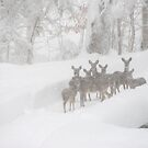 Herd of Deer in the Snow by Jean Meile