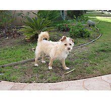 fuzzy Dog Photographic Print