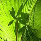 Palm Leaf Silhouettes by Rosalie Scanlon