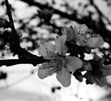 black and white peaches by idigscarykids