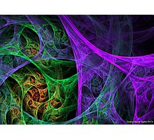 Oh, What a Tangled Web.... Photographic Print