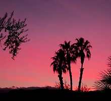 Vivid Desert Sunset by Tori Snow