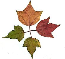 Love me or leaf me! by Colleen Marquez