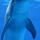 Dolphin smile by Sandra O'Connor