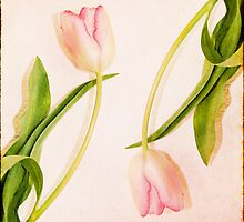 Pretty in pink by Eliza1Anna