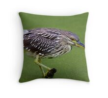 Juvenile Black-crowned Night Heron waits patiently Throw Pillow