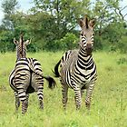Two Plains Zebra by Sassie Otto