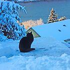 Cat admires the view by Annbjørg  Næss