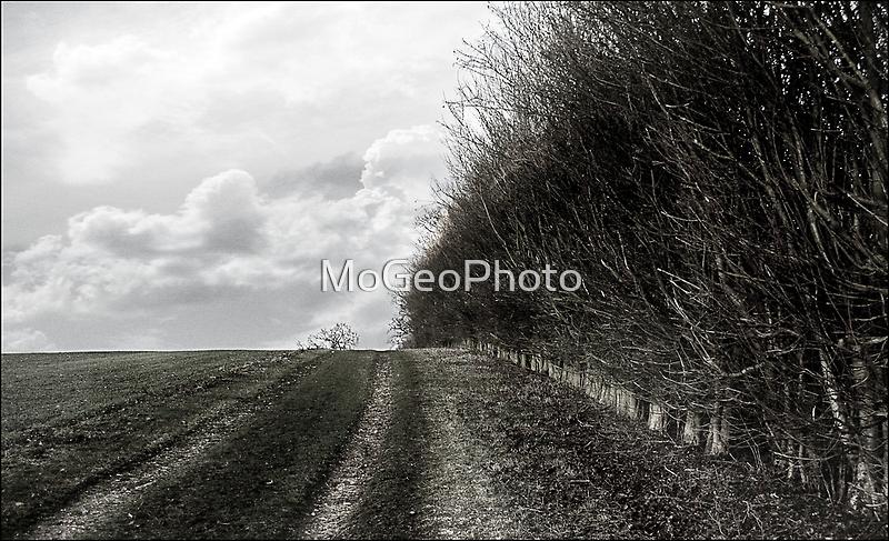 Hitchin Hedgerow by MoGeoPhoto