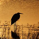 Great Blue Heron at Sunset by Debbie  Roberts