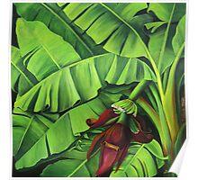 Banana Tree Flower Poster