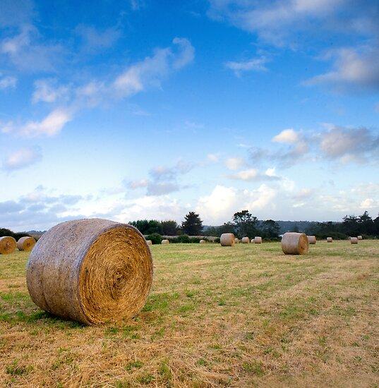 Hay ! by Aaron Radford