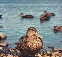 Happy Duck by fixtape