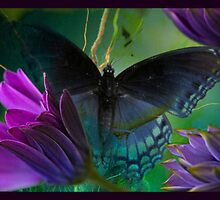Flighty3 by Susan Ringler