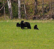 Bear Necessities by Lee-Anne Carver