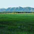 Montana Meadow by Susan Russell