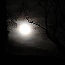 Wolf Moon  by Anima Fotografie