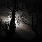 Bad Moon Rising by Anima Fotografie