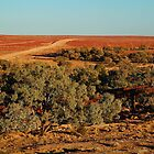 North Creek, Oodnadatta Track, Outback South Australia by Joe Mortelliti