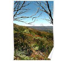 Grasses of Mt Blue Rag Poster