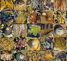 Point Lonsdale Reef Collage by Andrew Turner