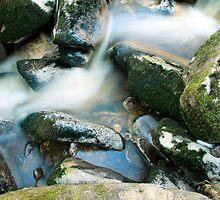 Woodland water at Glencree No1 by Martina Fagan