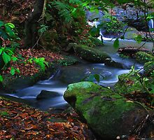 'Leafy Watercourse' by Gavin J Hawley