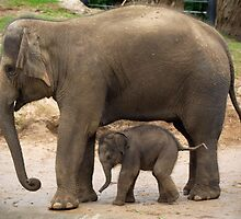 """Baby Mali"" &  Mum ""Dokkoon"" by Cecily McCarthy"
