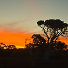 Sunset over trees by pennyswork