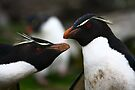 Rockhopper Penguins by Kyle Jerichow
