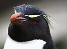 Rockhopper Penguin by Kyle Jerichow