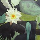 Water Lily at Government House by Angela ILIADIS