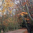 Autumn trees by amylw1