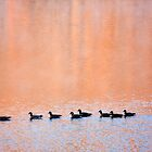Ducks at Sunrise by Michael Palmer