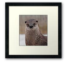 Otter Love Framed Print