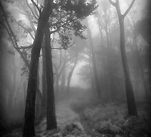 Trees in the Mist by Richard Mason