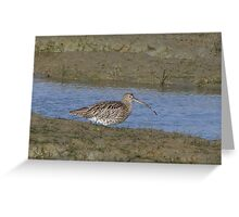 Curlew 01 Greeting Card