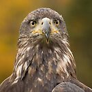 The Stare by Daniel  Parent