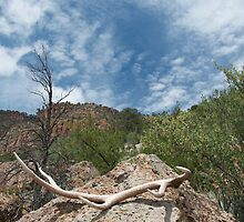 Antler, rock and sky: Bland Canyon by Gary Cascio